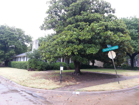 6703 Woodland Corner Lot Pic