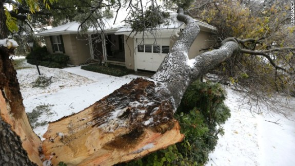 Broken tree trunk