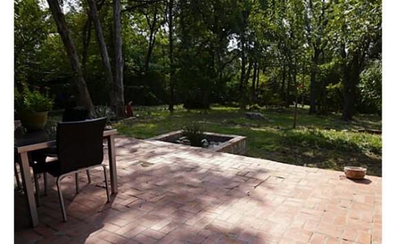 Gladiolus Backyard