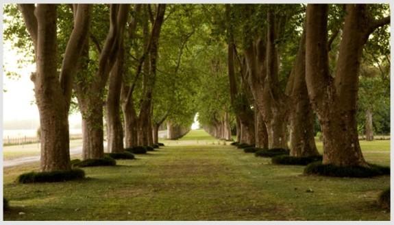 La Fortuna Trees (2)