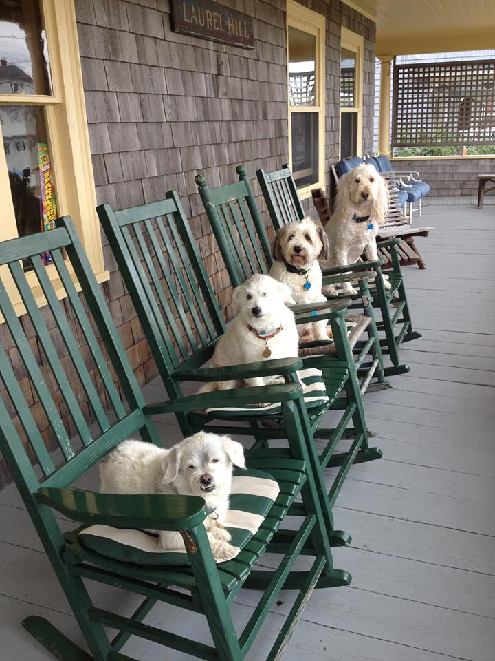 dogs on porch 7.2013